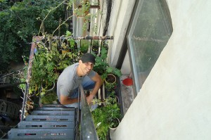 The Urban Organic Gardener on Green Living and Real Food