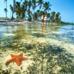 starfish-yucatan-peninsula-mexico
