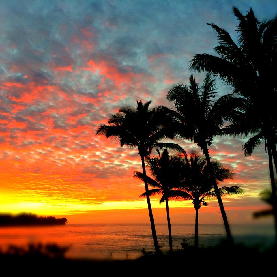 Knockout Kauai